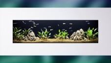 Luxusní nástěnné akvárium NatureWall z Česka