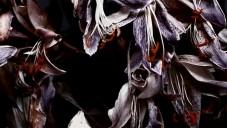 Underworld udělali klip Bird 1 ukazující život květin