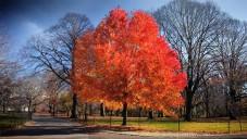 Jamie Scott zachytil krásy podzimu v New Yorku