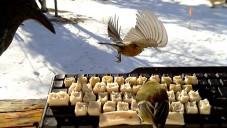 Reálni ptáci přispívali vlastními tweety na Twitter