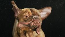 Zpomaleně natočení oklepávající se psi mají knihu