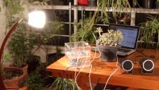 Pulsum Plantae odhaluje reakce a komunikaci rostlin