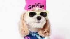 American Beagle navrhují módní kolekce pro psy a páníčky