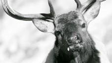 Asgeir Helgestad natáčí krásy přírody v rozlišení 5K