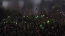 Dva němečtí umělci vytvořili úchvatný videomapping v lese