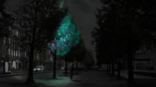 Zářící stromy by mohly nahradit pouliční osvětlení