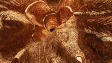 Middle Fork je reálná sádrová kopie obrovského stromu