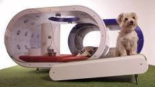 Dream Doghouse je futuristický koncept domu snů pro psy