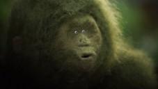 Belgičané natočili krátký loutkový film o malé zvědavé gorile
