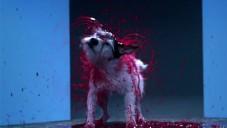Canismo polilo psy barvou a nechalo je otřepáváním malovat