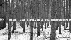Paul Johnson zanechává v přírodě krátkodobé grafické stopy