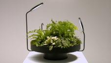 Viride je kolekce svítidel zaměřená na pokojové rostliny
