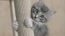 Ikea uvádí pelíšky a bytové doplňky pro psy a kočky