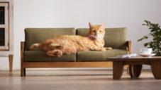 Japonská značka vyrobila kolekci zmenšeného nábytku pro kočky