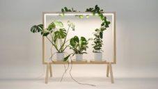 GreenFrame je speciální svítící rám pro domácí pěstování rostlin