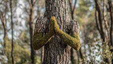 Monsieur Plant vytvořil z pěti francouzských stromů lidské bytosti