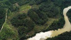 Ernest Zacharevic vykácel plantáži plné palem olejných nápis SOS