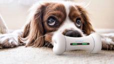 Wickedbone je první chytrá hračka pro psy ovládaná mobilem páníčka