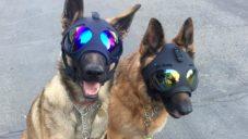 K9 Helm navrhují ochranné helmy Trident pro pracující psy