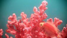 Pantone vyhlásilo korálovou barvu jako trendy barvu pro roku 2019