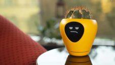 Lua jsou chytré květináče s lidskou tváří pomáhající v domácím pěstování