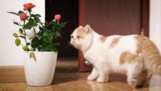 Vědci z MIT proměnili běžné pokojové rostliny na bezpečnostní senzory
