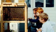 B-Box je včelí úl navržený pro městské chovatelství a záchranu včelstev