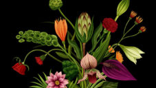 Britská ilustrátorka vytvořila animované video vyprávějící příběh rostlin