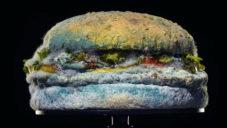 Burger King si udělal reklamu na plesnivějícím burgeru Whopper