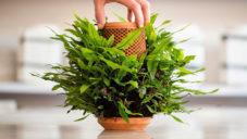 Terraplanter je revoluční květináč pro domácí pěstování květin pouze z vody