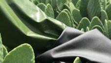 V Mexiku vyvinuli odolnou a jemnou veganskou kůži vyrobenou z kaktusů