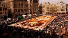V Bruselu vytvořili na náměstí obrovský koberec z 500 000 řezaných květin
