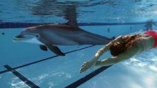 Hyperrealistický robotický delfín nahradí živá zvířata v zábavních parcích