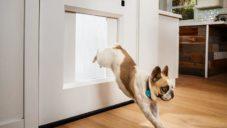 Pet Portal umožňující psovi jít ven skrze dveře otevírané přes mobil