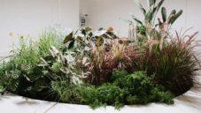 Erez Nevi Pana vytvořil instalaci z rostlin podobající se zvířatům