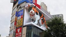 V centru Tokia žije na střeše mrakodrapu obří kočka
