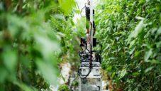 Nedostatek pracovních sil vyřešili v Japonsku robotem farmářem